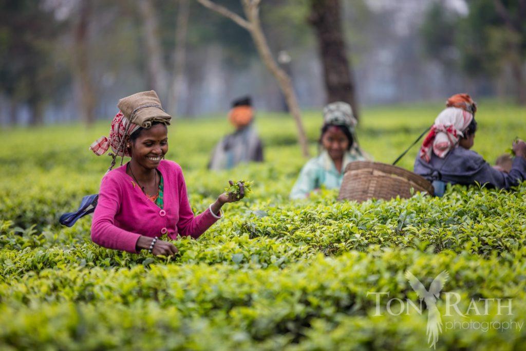 Why we use Chota Tingra Assam